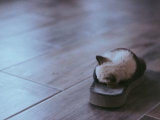 スリッパの中に猫