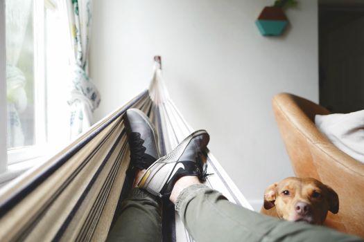 ハンモックで寝る男と見守る犬