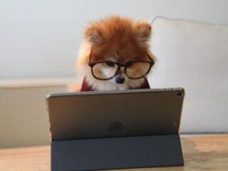 眼鏡をかけてPCに向かう犬